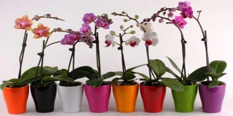 Дотримуйся цих 9 правил і твоя орхідея буде цвісти цілий рік • MamaBag 0ea3a4a2866af